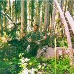 Elk_15